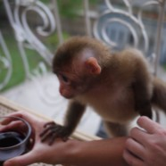 Monkeys drinking wine, nude maternity photos, and other such topics