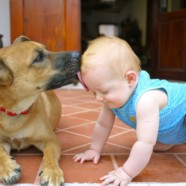 10 Ways My Baby Is Like My Dog