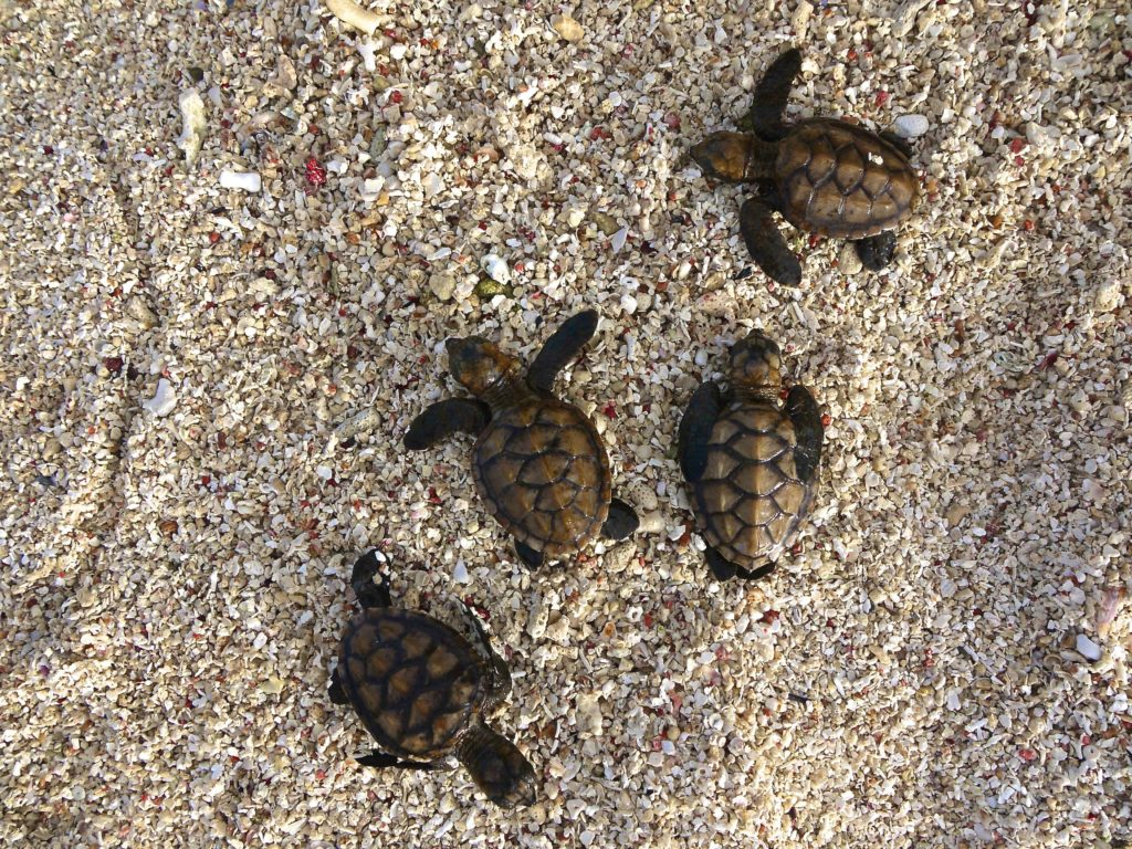 4 turtles le life