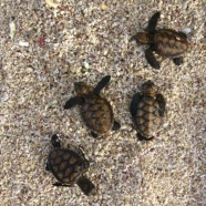 Camping With Baby Turtles