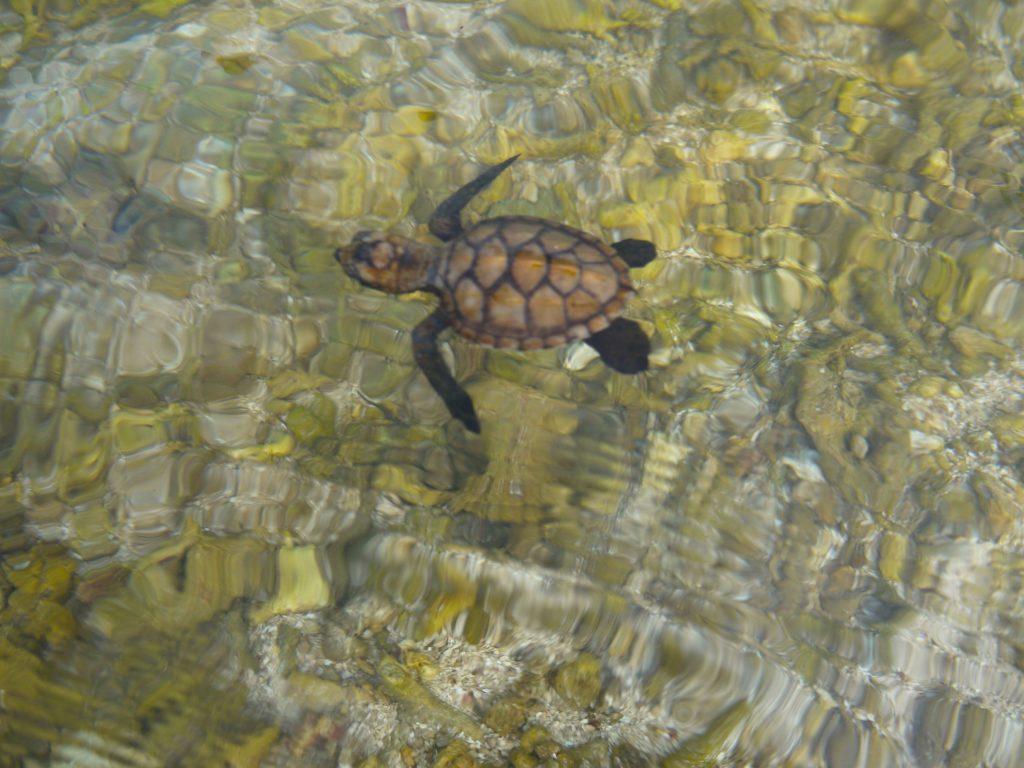 turtle le life