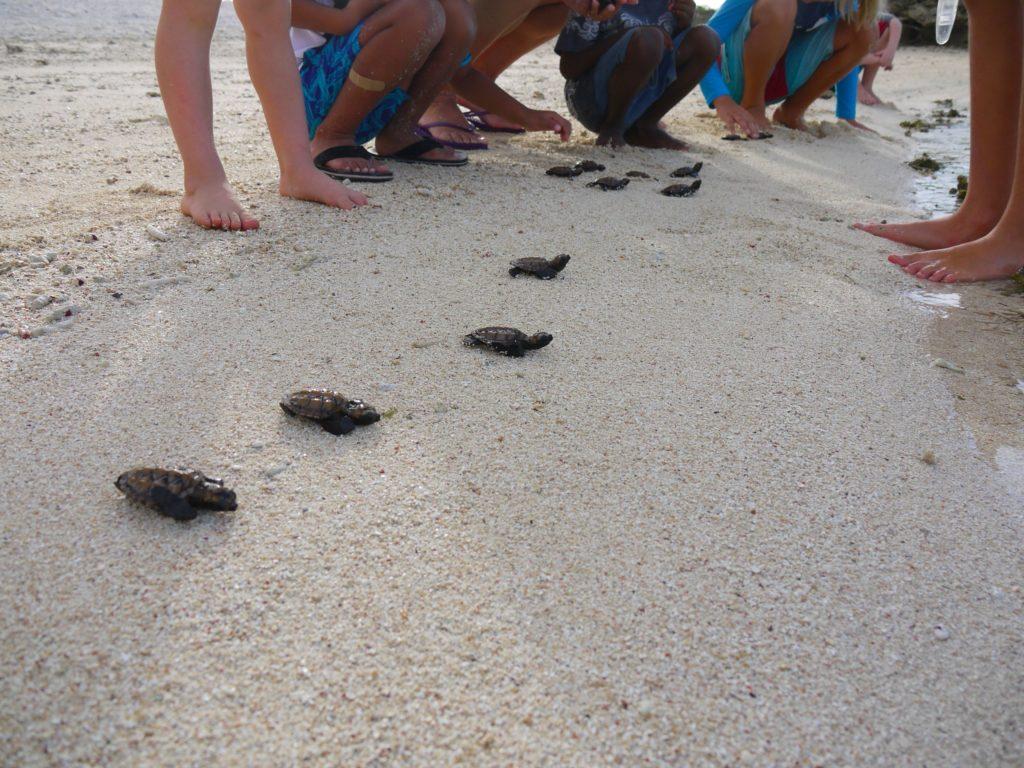 turtles le life 2